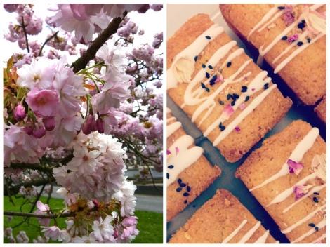 Cherry Blossom Montage